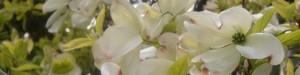 cropped-flowers42008-0031.jpg