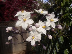 Flowers42008 009