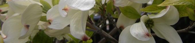 cropped-flowers42008-003.jpg