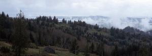cropped-ferndale-landscape.png