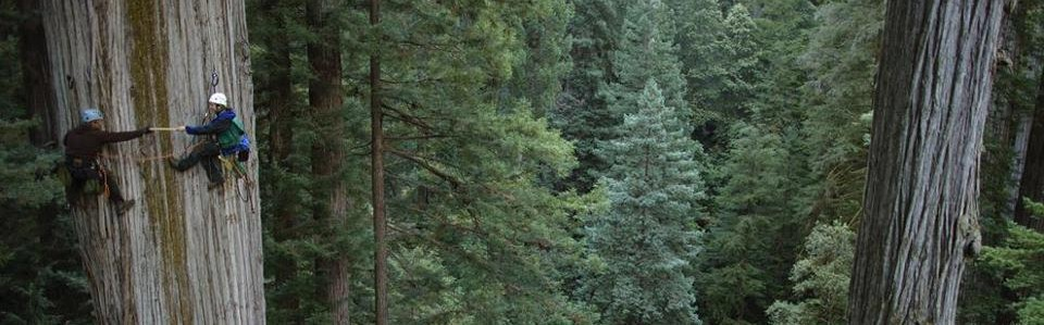 cropped-redwood.jpg